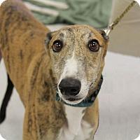 Adopt A Pet :: Bishop - Brandon, FL
