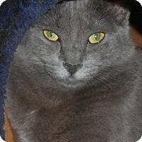 Adopt A Pet :: Stasia - New Port Richey, FL