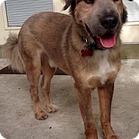 Adopt A Pet :: Beau - Ocean Ridge, FL