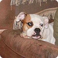 Adopt A Pet :: Penny Nikole - Dayton, OH