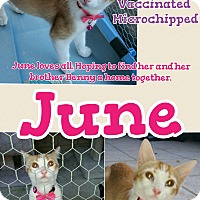 Adopt A Pet :: June - Madera, CA