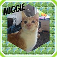 Adopt A Pet :: Auggie - Mount Laurel, NJ