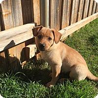 Adopt A Pet :: Gwen Stefani - Bedford, TX