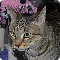 Adopt A Pet :: Jessie - Wheaton, IL