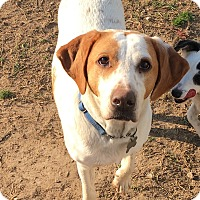 Adopt A Pet :: Charlie - Richmond, VA