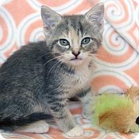 Adopt A Pet :: Nova - St Louis, MO