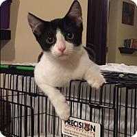 Adopt A Pet :: Skunk - New  York City, NY