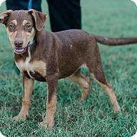 Adopt A Pet :: Dean $250 - Seneca, SC
