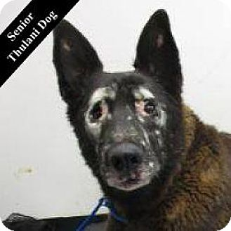 German Shepherd Dog Mix Dog for adoption in Cupertino, California - Keller T.