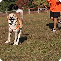 Adopt A Pet :: Duncan-Adoption Pending - Pinehurst, NC