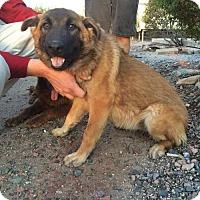 Adopt A Pet :: JOSEY - Chandler, AZ