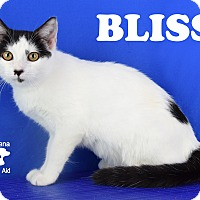 Adopt A Pet :: Bliss - Carencro, LA