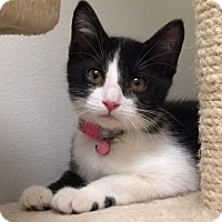 Adopt A Pet :: Trixie - Romeoville, IL