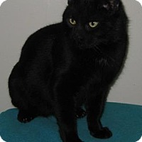 Adopt A Pet :: Blackie - Gary, IN