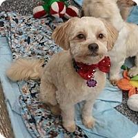 Adopt A Pet :: Jackson - Encinitas, CA