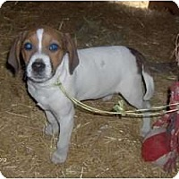 Adopt A Pet :: Kela - Clayton, OH