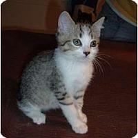 Adopt A Pet :: Iris - Troy, OH