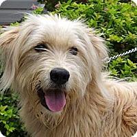 Adopt A Pet :: *Vanessa - PENDING - Westport, CT