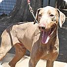 Adopt A Pet :: Titan