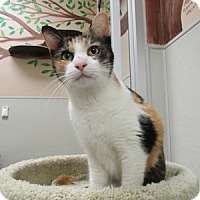 Adopt A Pet :: Big Nose Kate - Gilbert, AZ