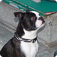 Adopt A Pet :: Buddy - Lynnwood, WA