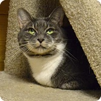 Adopt A Pet :: Desiree - Waxhaw, NC