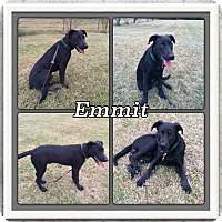 Adopt A Pet :: Emmitt meet me 11/6 - Manchester, CT