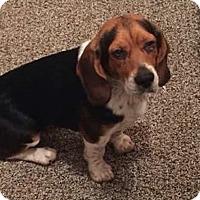 Adopt A Pet :: Joonie - Dumfries, VA