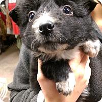 Adopt A Pet :: Jake - Ogden, UT