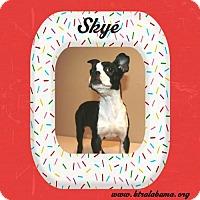 Adopt A Pet :: Skye - Alabaster, AL