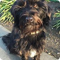 Adopt A Pet :: Zoe - Sunnyvale, CA