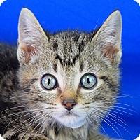 Adopt A Pet :: Huey - Carencro, LA