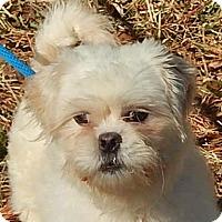 Adopt A Pet :: Irvin - Locust Fork, AL