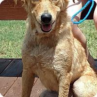 Labrador Retriever Mix Dog for adoption in Austin, Texas - Baxter