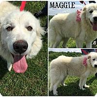Adopt A Pet :: Maggie - Kimberton, PA