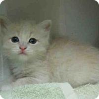 Adopt A Pet :: *DOUGH - Norco, CA