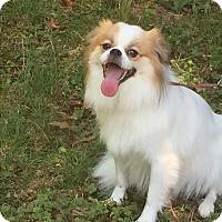 Adopt A Pet :: Fire - Greensboro, MD
