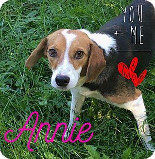 Beagle Dog for adoption in Fort Wayne, Indiana - Annie