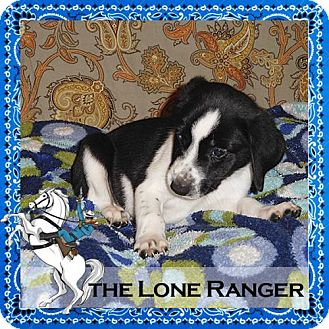 Hound (Unknown Type) Mix Puppy for adoption in Medford, New Jersey - The Lone Ranger