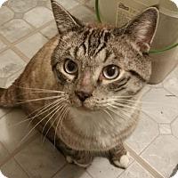 Adopt A Pet :: Cody - Sharon Center, OH