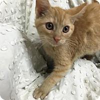 Adopt A Pet :: Ignocio - Paducah, KY