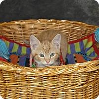 Adopt A Pet :: Sherbet - Jackson, MS