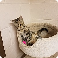 Adopt A Pet :: Ohio - Troy, OH