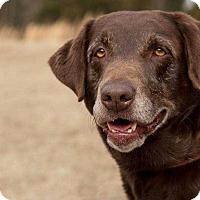 Adopt A Pet :: Lucy Lou - Lexington, TN