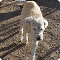 Adopt A Pet :: Max - Peyton, CO