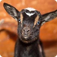 Adopt A Pet :: ELOISE - Dedham, MA