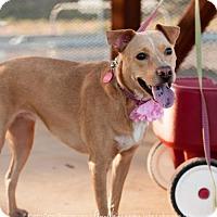 Adopt A Pet :: Lana - Tempe, AZ