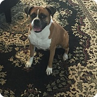 Adopt A Pet :: Reyna - Austin, TX