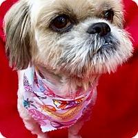 Adopt A Pet :: Koko Bella - Irvine, CA