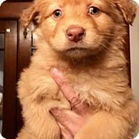 Adopt A Pet :: BOOBOO - ST LOUIS, MO